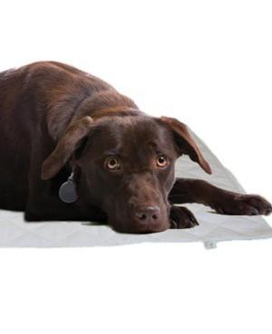 Tapis magnétique pour chat ou chien 100 X 50cm